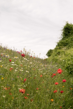 Cornwall-Summer-Meadow-5