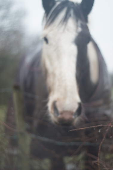soft-focus-horse